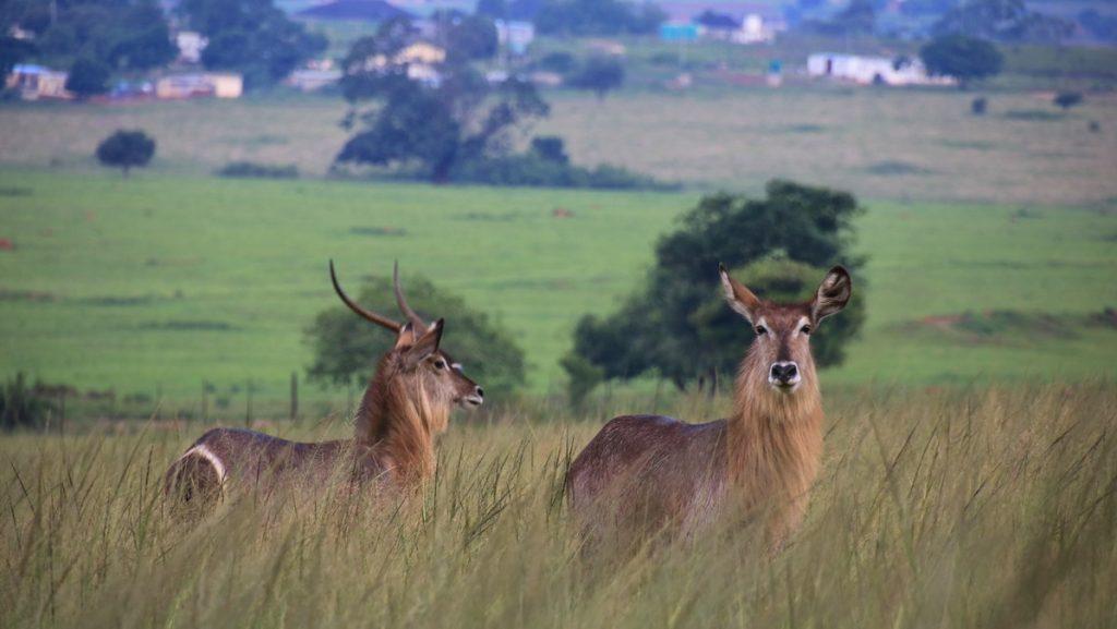 Mlilwane Wildlife Sanctuary
