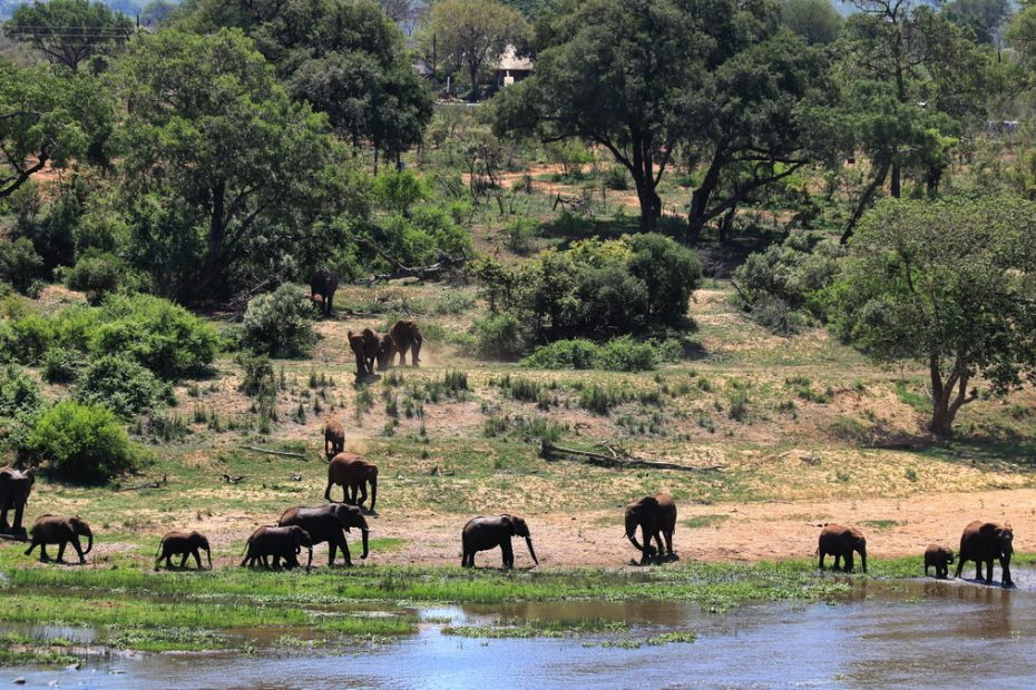 Elephants in Kruger national Park
