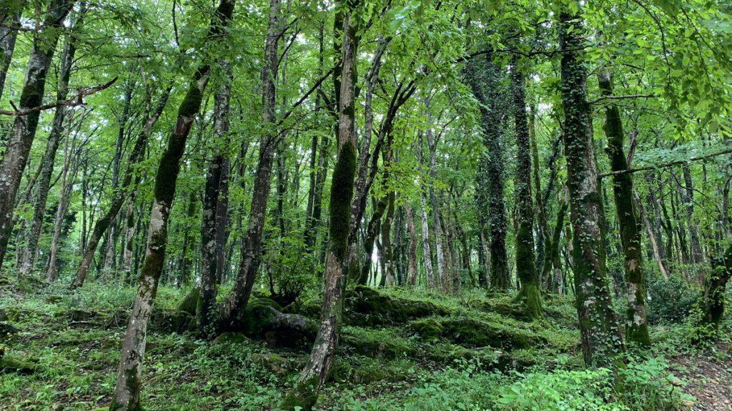 Colchic forest in Sataplia nature reserve