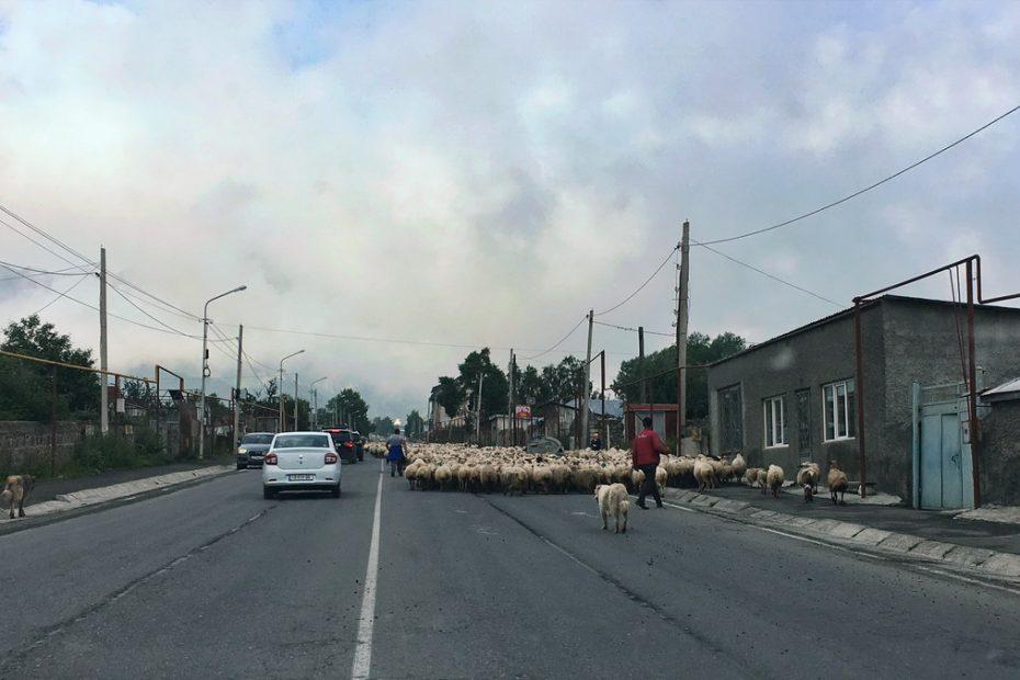 Sheep on the road in Georgia