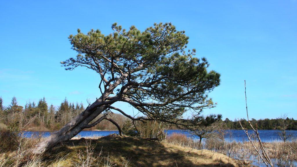 Tree at Per Madsens kær